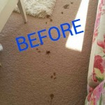 Miramar_FL_CARPET_CLEANING_020