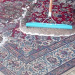 Miramar_FL_RUG_CLEANING_009
